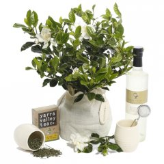 fragrant gardenia tea hamper loved for their wonderful perfume gardenias are hard to resist gardenias are small evergreen shrub that produce pearlwhite blooms with a heavenly perfumeour g. Please Click the image for more information.