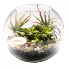 little creatures lucky money tree terrarium the money tree is a popular plant used in feng shui planning the leaves are thick and coin like and if growing well symbolise wealth coming into the home or businessBea. Please Click the image for more information.