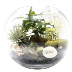 little creatures potbelly fig bonsai terrarium a bonsai is a gift of life giving years of enjoyment a relative of the giant banyan tree the potbelly fig is used in feng shui planning placed indoors in strategic areas B. Please Click the image for more information.