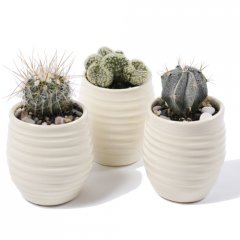 luna cacti trio assorted cacti planted up in our signature hand made ceramic luna pots these are perfect desk plants or centerpieces grouped on a table ideal for corporate giftsinc. Please Click the image for more information.