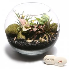 bottle babies terrarium introducing our gorgeous living arrangements of small hardy indoor plants in gentle hues of greens easy care easy on the eye ideal for any occasion any location in the home or officeour glass terrarium arrives with a couple of companion air plants decorative moss  stonesquick and . Please Click the image for more information.