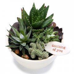 mature succulent & cacti zen bowl our eyecatching ceramic zen bowl is planted with a choice of 4 water wise succulents  cacti artfully arranged into a pleasing composition included in gift 1 medium zen bowl planted with 1 large and 4 small succulentscacti1 ceramic stamped emotive pebble or tag hand made . Please Click the image for more information.