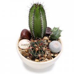 medium cacti zen bowl our eyecatching ceramic zen bowl is planted with a choice of 5 sculptural water wise cacti included in gift 1 medium zen bowl planted with a selection of 2 medium  2 small cacti1 ceramic stamped emotive pebble or tag hand made. Please Click the image for more information.
