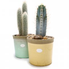 large cacti crackle pot sculptural cacti planted in beautiful iconic pots with a cracked glaze available in subtle hues suitable for  indoors or outside . Please Click the image for more information.