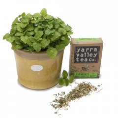 calming lemon balm herbal tea pot lemon balm herb is a lemon scented herb related to the mint family used to aide insomnia  anxietyincluded in gift1 large lemon balm herb planted in a medium crackle pot 1 box of organic loose leaf herbal lemony tea care cardbNO CERAMIC PEBBLE INCLUDED IN PLANTINGb pebble and tag is extra Please Click the image for more information.