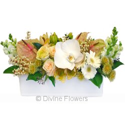 Floral Hedge in Pastels  Priced from $ 178  Click for more details