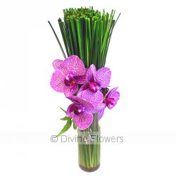 Phalaenopsis Orchid Vase  Priced from $ 66  Click for more details