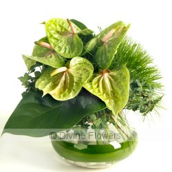 Menthe  Priced from $ 94  Click for more details