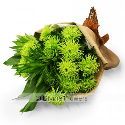 Grand Chrysanthemums Green  Priced from $ 79  Click for more details