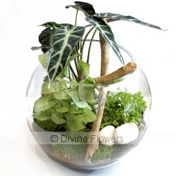 Terrarium   Priced from $ 110  Click for more details