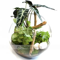 Terrarium 25cm  Priced from $ 115  Click for more details