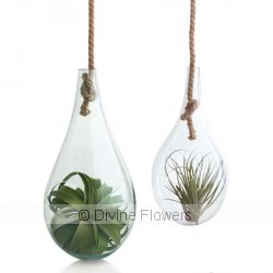 Hanging Teardrop Terrarium  Priced from $ 55  Click for more details